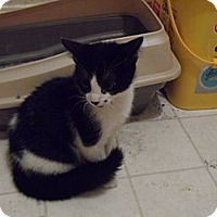 Adopt A Pet :: Jack - Pensacola, FL