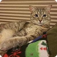 Adopt A Pet :: Dovie - Willingboro, NJ