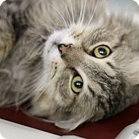 Adopt A Pet :: Donald - Chicago, IL