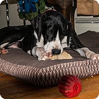 Adopt A Pet :: Maddie - Phoenixville, PA
