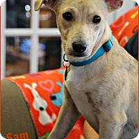 Adopt A Pet :: Sam - Homewood, AL
