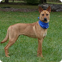Adopt A Pet :: Kharma - Mocksville, NC