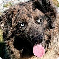 Adopt A Pet :: BRETT(GORGEOUS-SO SMART!!) - Wakefield, RI