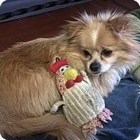 Adopt A Pet :: ROCKY - Mahopac, NY