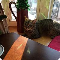 Adopt A Pet :: Hobbes - Pinckney, MI