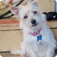 Adopt A Pet :: Ashland - Eugene, OR