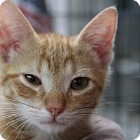 Adopt A Pet :: Ritchie Valens - Sarasota, FL