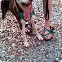 Adopt A Pet :: Micah - Roswell, GA