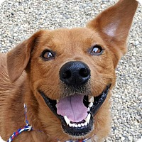 Adopt A Pet :: Red - Bloomington, IL