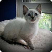 Adopt A Pet :: Knox - Fairborn, OH