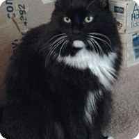 Adopt A Pet :: Jade Courtesy Post - Absecon, NJ