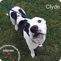 Adopt A Pet :: Clyde - Sidney, OH