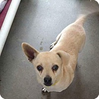 Adopt A Pet :: Butter cup - Staunton, VA