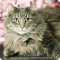 Adopt A Pet :: Wolverine - Appleton, WI