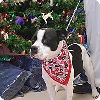 Adopt A Pet :: Panama - Lebanon, ME