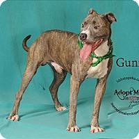Adopt A Pet :: Gunny - Topeka, KS