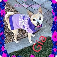 Adopt A Pet :: Gia - Las Vegas, NV