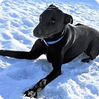 Adopt A Pet :: Jaden - Siren, WI