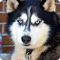 Adopt A Pet :: Mayumi - Roswell, GA