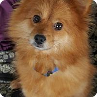 Adopt A Pet :: Sabrina - Vacaville, CA