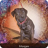 Adopt A Pet :: Morgan - Odenville, AL