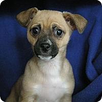 Adopt A Pet :: Khloe - Sacramento, CA