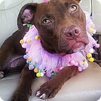 Adopt A Pet :: Rosie - Charlotte, NC