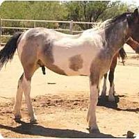 Adopt A Pet :: Durango - Green Valley, AZ