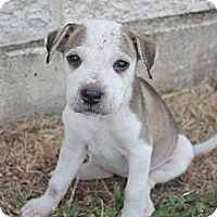 Adopt A Pet :: Pearl - Stilwell, OK