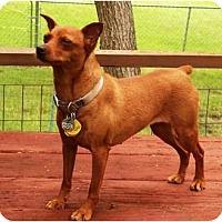 Adopt A Pet :: Annie - Topeka, KS