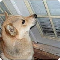 Adopt A Pet :: Bogart - Fulton, MD
