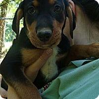 Adopt A Pet :: Saturday - Brattleboro, VT