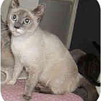 Adopt A Pet :: Kismet - Dallas, TX