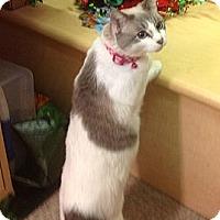 Adopt A Pet :: Snowball - Modesto, CA