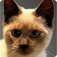 Adopt A Pet :: Kona - Davis, CA