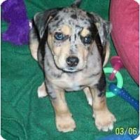 Adopt A Pet :: Jared - Richmond, VA