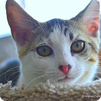 Adopt A Pet :: Nikki - Island Park, NY