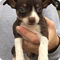 Adopt A Pet :: Launa#1M - Orlando, FL