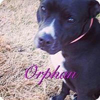 Adopt A Pet :: Orphan - Clarksville, TN