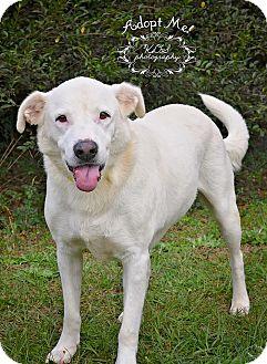 Labrador Retriever Mix Dog for adoption in Fort Valley, Georgia - Bubba