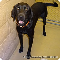 Adopt A Pet :: Duke - Maryville, TN