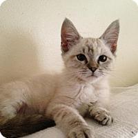 Adopt A Pet :: Gracie - Taylor, MI
