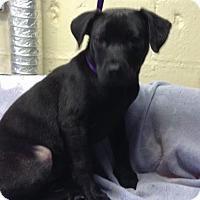Adopt A Pet :: Hannah - Willingboro, NJ