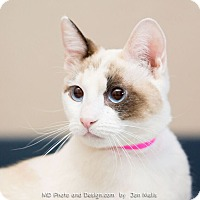 Adopt A Pet :: Pearl - Fountain Hills, AZ