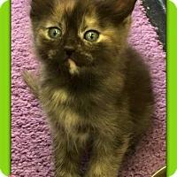 Adopt A Pet :: Teagan - Atco, NJ
