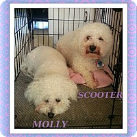 Adopt A Pet :: Scooter and Molly - SE TX - Tulsa, OK