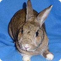 Adopt A Pet :: Radish - Woburn, MA