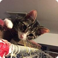 Adopt A Pet :: Murphy - McHenry, IL