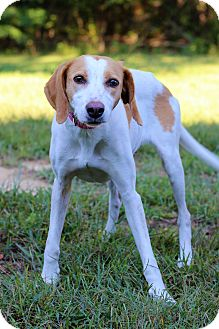 Hound (Unknown Type) Mix Dog for adoption in Waldorf, Maryland - Lulu