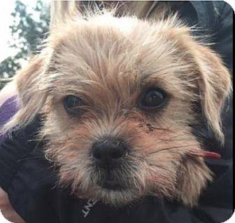 Terrier (Unknown Type, Medium) Mix Dog for adoption in Winnipeg, Manitoba - Nugget